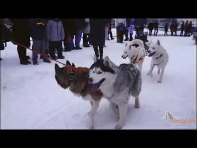 Калуга - Новогодняя столица России 2021